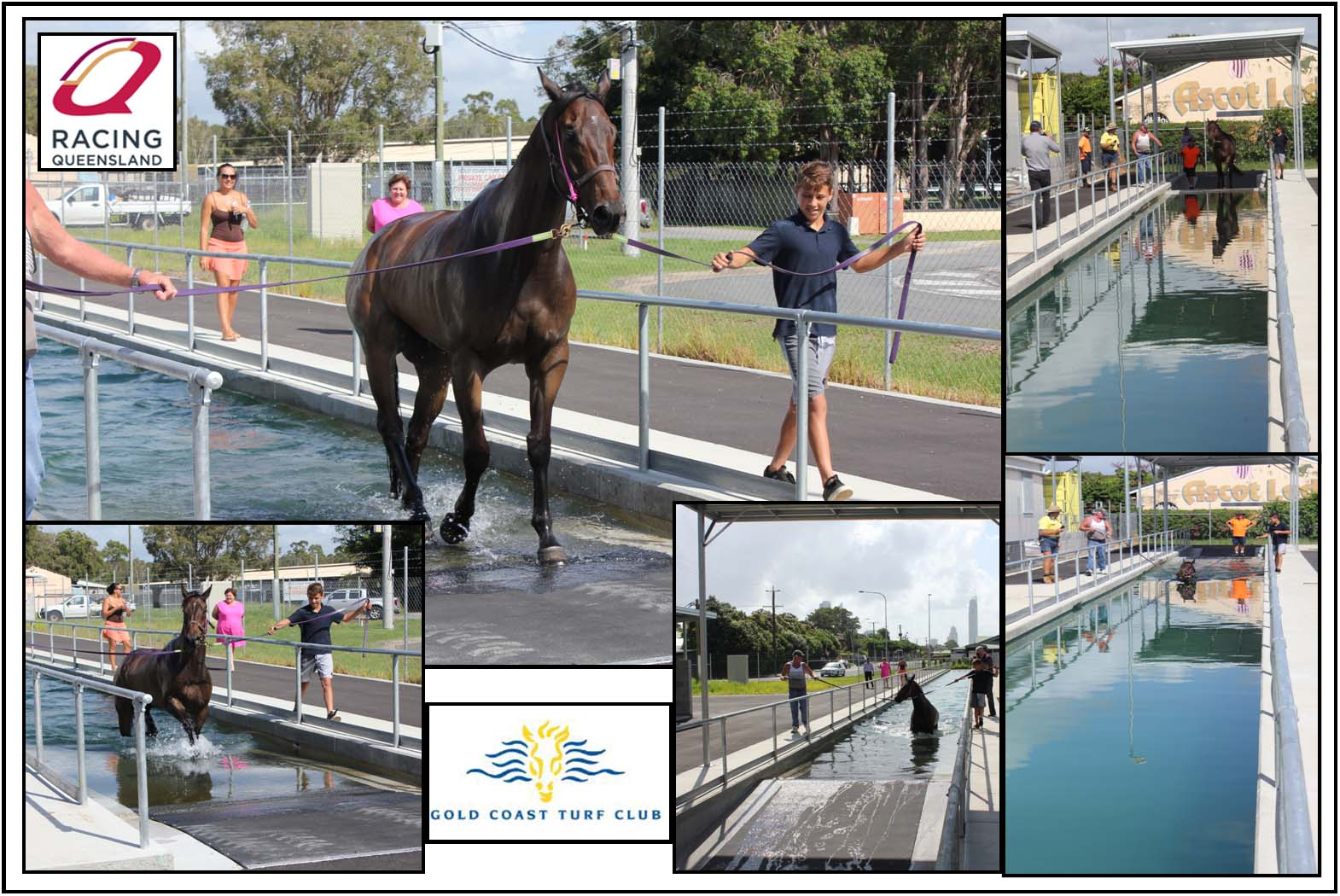 Equine Pool by Kleva Konstructions.